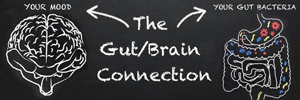 probiotics mood gut brain
